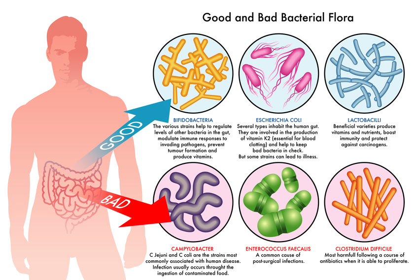 Natural Info For Probiotics That Gets Rid Of Candida
